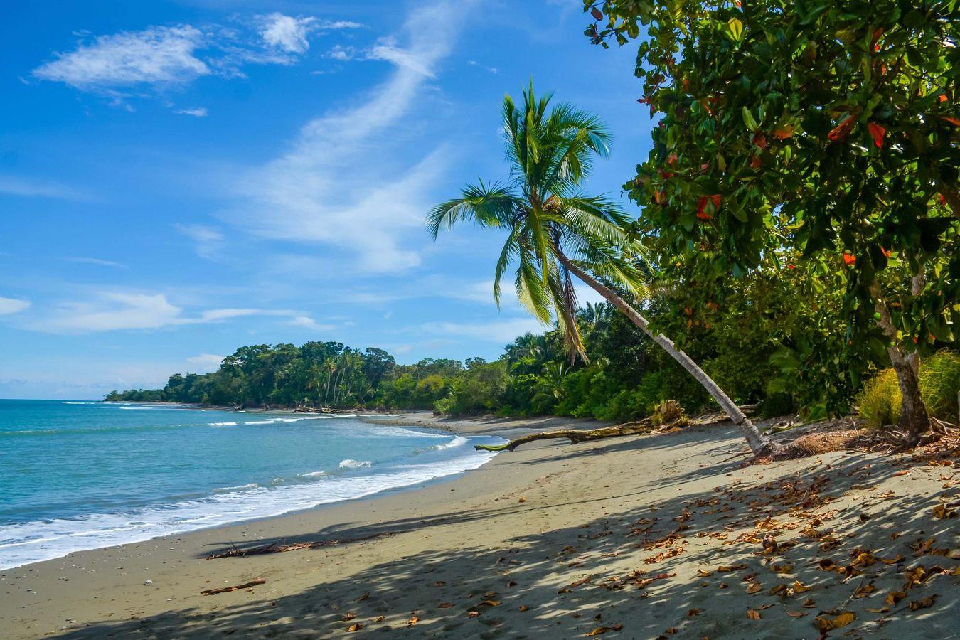 In the Magical Jungle of COSTA RICA, Fall 2021